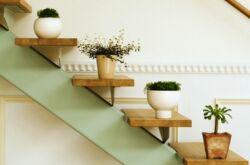 Растения «для ленивых»
