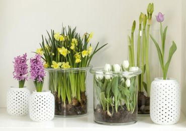 Многие начинающие цветоводы считают, что все растения любят солнце и оно им навредить не может.