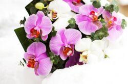 Содержание орхидей зимой: 15 полезных советов