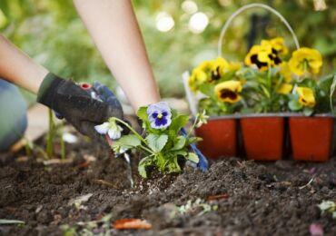 Размножение комнатных растений. Популярные способы