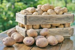 Как сохранить картофель в квартире