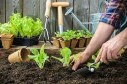 Как вырастить крепкую здоровую рассаду