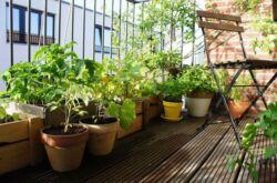 Как сделать комнатный сад. Плодовый сад в квартире