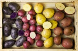Как выбрать сорт картофеля