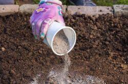 Зола как удобрение и не только: использование золы в огороде