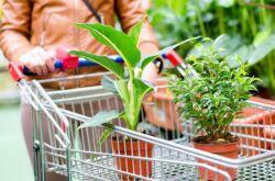 Как правильно купить растение или цветы