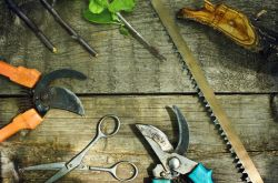 Инструменты для обрезки деревьев и кустарников: как выбрать