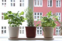 Овощи на подоконнике. Основные правила выращивания и ухода