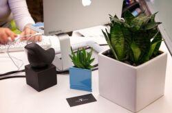 Уход за растениями для офиса