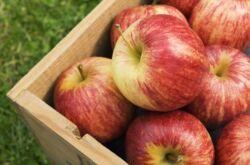Как сохранить яблоки в квартире