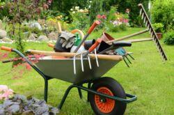 Как подготовить сад к зиме. Обрезка и побелка деревьев, перекапывание почвы, защита от вредителей