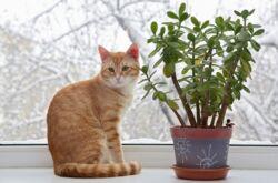 Как отучить кота есть цветы и комнатные растения. Что делать, если кот ест цветы?