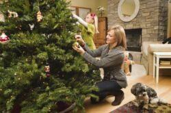 Как выбрать свежую елку. Выбираем елку на Новый год правильно