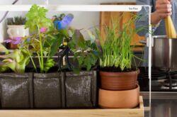 Как сделать фитолампы для растений своими руками? Светодиодные фитолампы для растений