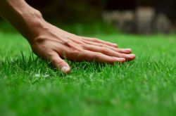 Виды газонов, классификация газонов и характеристика каждого вида