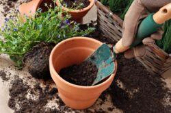 Грунт для комнатных растений. Какую почву выбрать для конкретного растения