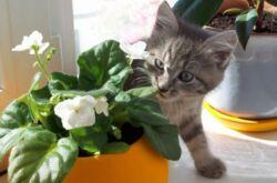 Комнатные растения и домашние животные. Как защитить растения и цветы от животных