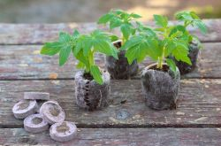 Торфяные таблетки – как пользоваться для выращивания рассады. Инструкция, видео