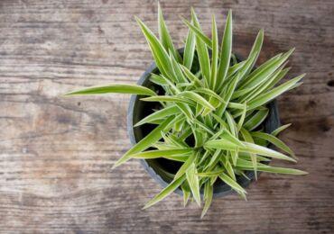 Комнатные растения для семейного счастья, любви и благополучия. Описание, фото