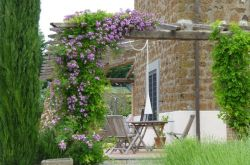 Вьющиеся растения для сада и дачи: лучшие многолетние и однолетние цветы