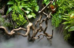 Как сделать палюдариум своими руками? Растения, фото