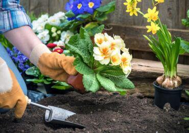 Посадка цветов на рассаду. Выращивание рассады цветов, посев семян на рассаду