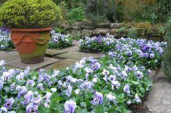Выбираем растения для бордюров. Бордюрные цветы: подбор многолетников и однолетников