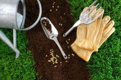 Как сделать хороший газон на даче своими руками. Технология посадки, полива и ухода за газоном летом и зимой