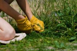 Препараты и средства от сорняков. Как выбрать хорошее средство от сорняков