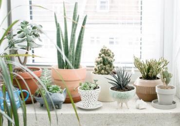 Как правильно выбрать растения для восточных и западных окон