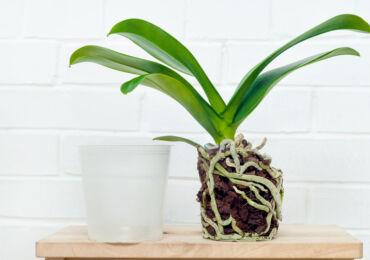 Субстрат для орхидей в домашних условиях. Как подобрать лучший грунт для орхидей