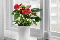 Ядовитые комнатные растения