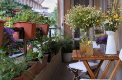 Вьющиеся растения для балкона: быстрорастущие, многолетние и однолетние цветы