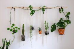 Комнатные лианы – уход в домашних условиях. Выращивание лиан и вьющихся растений. Описание, виды. Фото