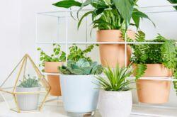 Период покоя растений