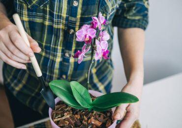 Применение янтарной кислоты для орхидей