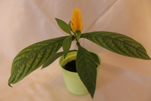 через 2-3 недели у вас появятся цветы