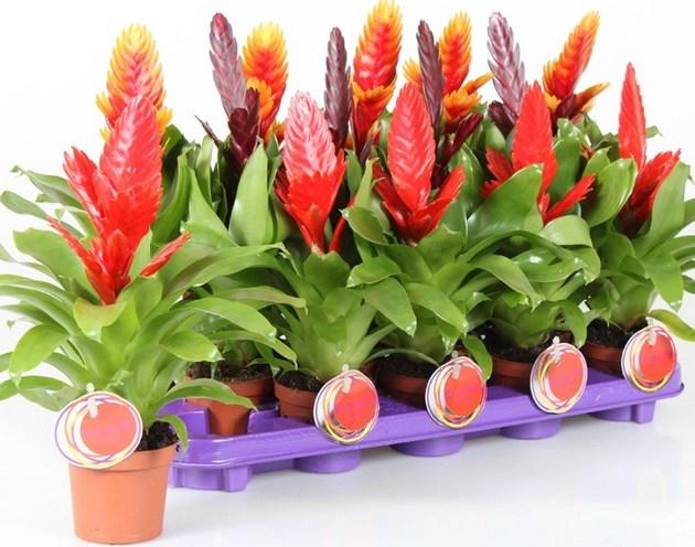 Комнатные растения и садовые цветы