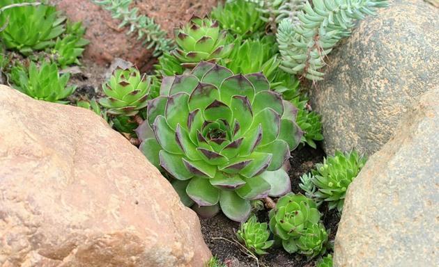 Необыкновенно интересное растение