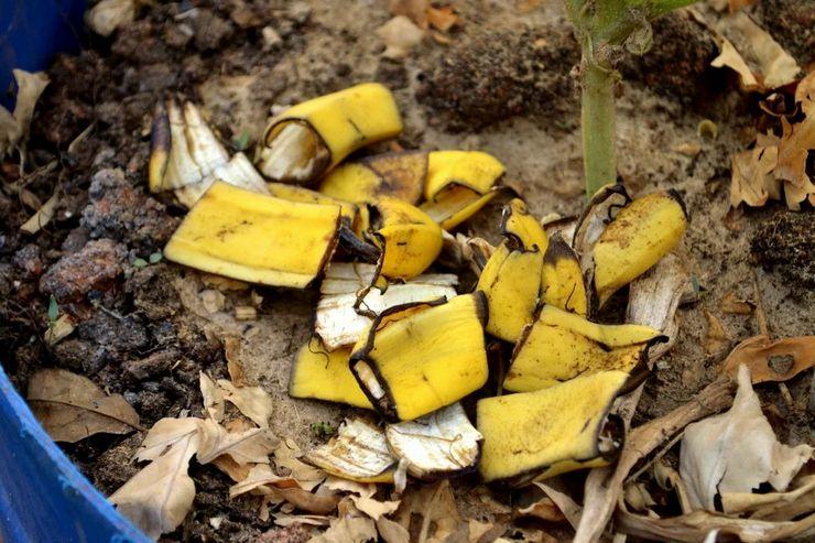 Банановая кожура в качестве удобрения для растений