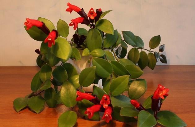 Подкармливать его лучше всего комплексным минеральным удобрением для цветущих растений