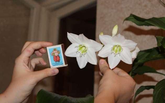 Красивые цветы, которые распускаются дважды за год