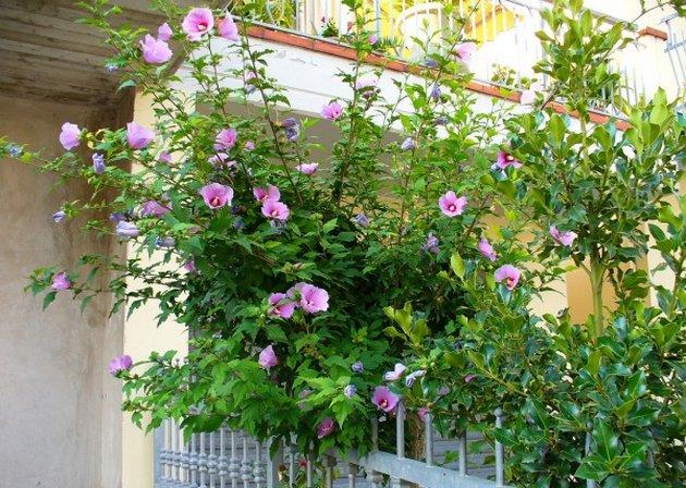 Если вы решили вырастить цветок из черенка, делайте это лучше в летнее время
