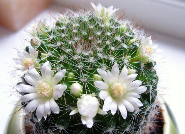Уход за кактусами действительно незамысловатый, но и он, как ни крути, тоже требует вложения времени и сил