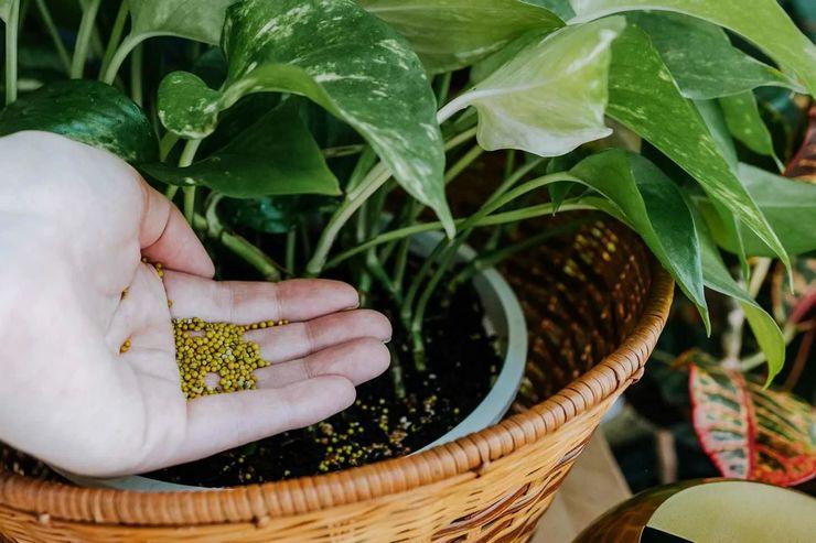 Подкормка растений осенью