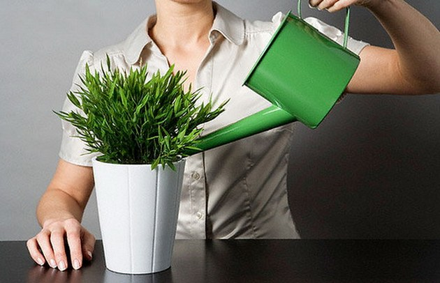 Наступает авитаминоз у растений