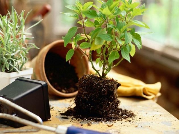 Земля для комнатных растений