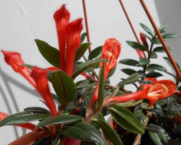 Выращивание, пересадка и размножение цветка
