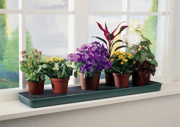 Растения появляются в доме по разным