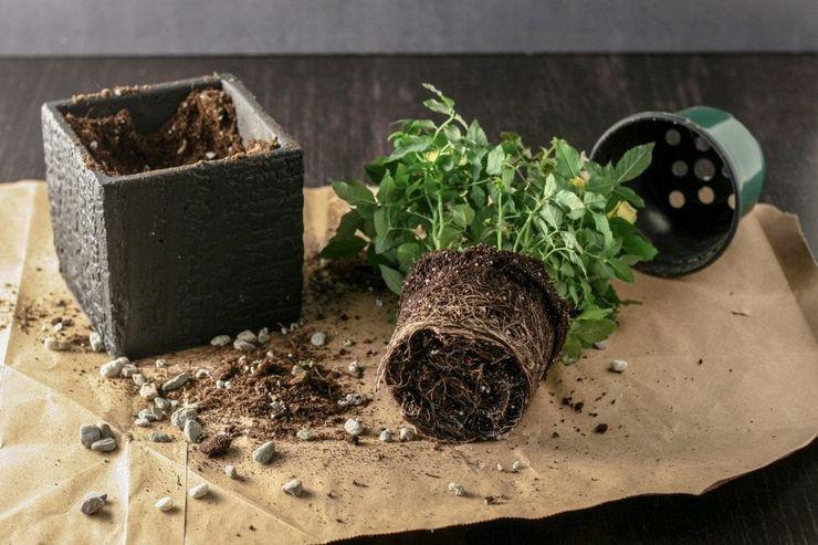 Адаптация растения и уход в карантине